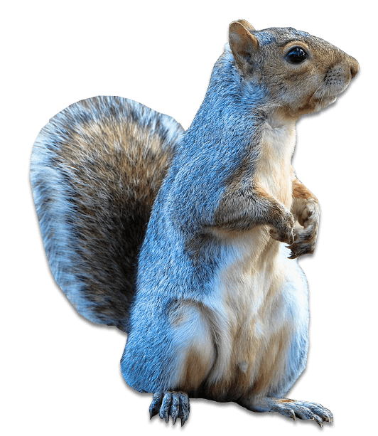 Taxidermy Made Easy - How To Taxidermy Guide: DIY Taxidermy Classes